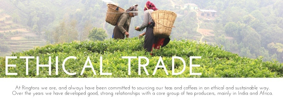 At Ringtons we are, and always have been committed to sourcing our teas and coffees in an ethical and sustainable way. Over the years we have developed good, strong relationships with a core group of tea producers, mainly in India and Africa.